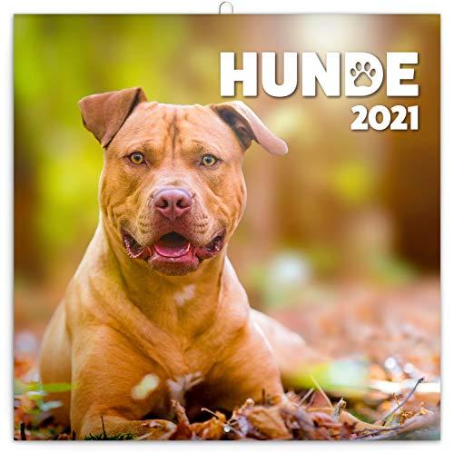 Calendario de pared 2021 para perros, calendario de folletos con calendario mensual, calendario de animales 30 x 30 cm (30 x 60 abierto)