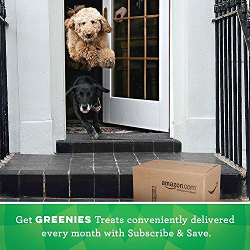 GREENIES Original Regular Natural Dog Dental Care Chews Oral Health Dog Treats, 36 oz. Pack (36 Treats)