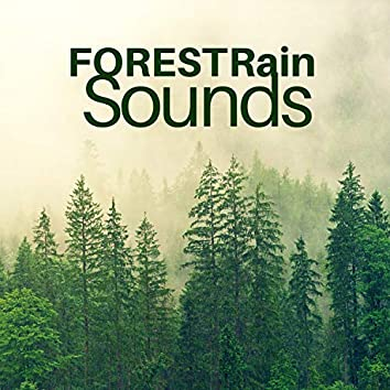 Forest Rain Sounds for Sleeping or Studying   2 Hours
