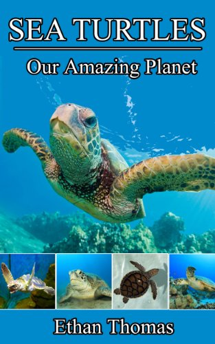 Sea Turtles! Sea Turtle Book for Kids - Fun Facts and Sensational Full Color Pictures