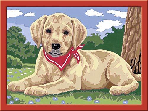 5d diamant schilderij kits volledige boor DIY hond met sjaal 40x50cm Geen frame diamant schilderij kits voor volwassenen kunst en kunstnijverheid home decor