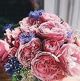 Bricolage Toile Peinture Peinture par numéros Cadeau de Vacances Adultes Fleurs Bouquet de Rose oeillet dans Un Vase en Verre