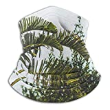 WlQshop Calentadores de Cuello Green Banana Tree Palm Leaves Neck Gaiter Mascarilla Bufandas Headban...