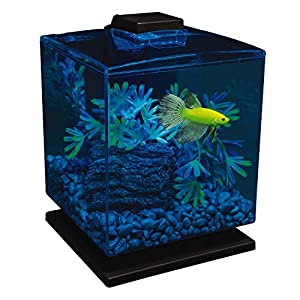 how many glofish in a 10 gallon tank