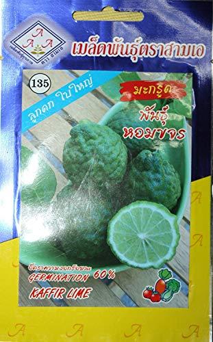 FERRY Hohe Wachstum Seeds Nicht NUR Pflanzen: Seeds CUSHY-15Seeds Thai Kaffir Limette, Hystrix, Bai Magrood, Leech Kalk Seeds von 3A