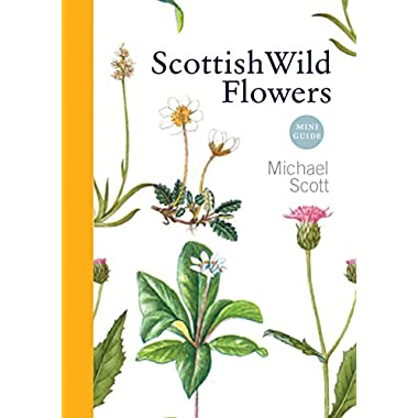 Scottish Wild Flowers: Mini Guide