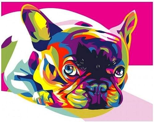 Artventura T40500080 maßen nach Zahlen, Regenbogenfarben, franz scher Bulldogge, 40 x 50cm