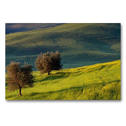 Premium Textil-Leinwand 90 x 60 cm Quer-Format Olivenbäume | Wandbild, HD-Bild auf Keilrahmen, Fertigbild auf hochwertigem Vlies, Leinwanddruck von Peter Schürholz