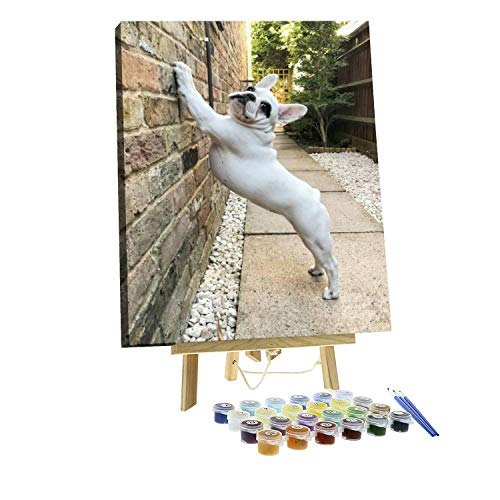 Paint by Numbers DIY French Bulldog Puppy Stretching in The Morning on a Wall Canvas Painting Set with Acrylic Pigment Paintbrush Wooden Easel for Adults and Children Artwork 16' x 20'
