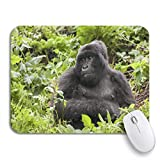 Mabby マウスマット - 240 x 200mm,Animal Mountain Gorilla in The Jungles of Rwanda Africa,for Office and Gaming,コンピュータマウスパッド滑り止めラバーベース