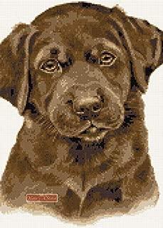 Chocolate Labrador Puppy Counted Cross Stitch kit