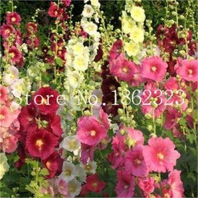 FARMERLY Paquet de graines: Vente Hot 100 pcs Rare couleur rose trémière Bonsai trémière Mix Alcea rosea Bonsaïs Planta bricolage Home Jardin Décoration: 8