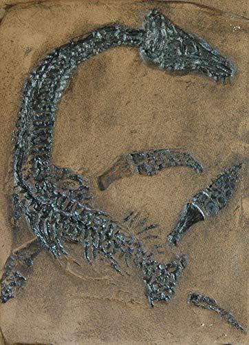 Schwimmsaurier Replik in Museums Qualität; Fossil Tierfossilien, Fossilien, Nachbildung, Abdruck, Tier, Tiere, Nessie, Dinosaurier Fliese