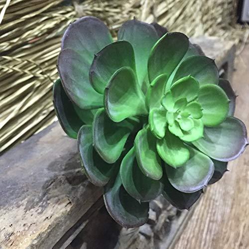 Bureau 6 stks 16 cm Grote Kunststof Medinilla Magnifica Emulatie Van Vlezige Planten Hoge Kwaliteit Home Decoratie Vaas Ornament Arts Symbool Geluk