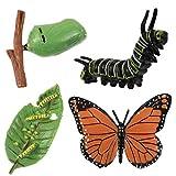 Angoily 4 Piezas Figuras de Insectos Ciclo de Vida de Mariposa Orugas de Plástico a Mariposas Figura de Bug Kit de Juguete Proyecto Escolar Educativo para Niños Pequeños