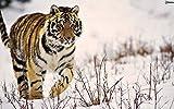 LIWEIXKY Rompecabezas de Madera Rompecabezas de 1000 Piezas Juguete Educativo para nios Juego de descompresin Regalo para Adultos  tiger-1000