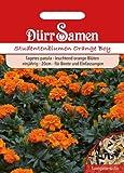 Studentenblumen Orange Boy