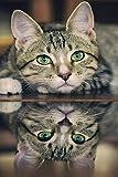 YHZSML 5D Diamante De La Pintura De Paisaje Natural_Animal Gato Diamond Painting 30x45cm_para Adultos Pintura Completa con Diamante decoración de Pared Punto de Cruz