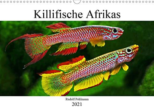 Killifische Afrikas (Wandkalender 2021 DIN A3 quer)