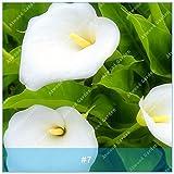 ZLKING colorido 2pcs cala Bulbos de flores de plantas...