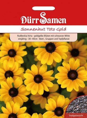 Dürr Samen 1096 Sonnenhut Toto Gold (Sonnenhutsamen)