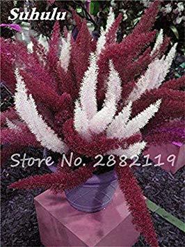 Vista Prix le Plus Bas!100 Pcs Graines De Sétaire Mixte Sillons Fougères Bonsaï Herbe Plantes Fleurs Vivaces Croissance Naturelle Pour La Maison & Jardin 3
