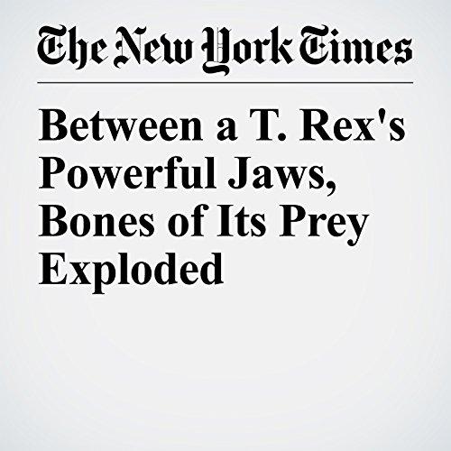 Between a T. Rex's Powerful Jaws, Bones of Its Prey Exploded copertina