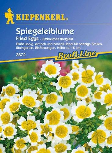 Spiegeleiblume, 'Fried Eggs'