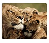Lion Cub Caring Tender Sweet Mouse Pads Customized Made to Order Support Ready 9 7/8 Inch (250mm) X 7 7/8 Inch (200mm) X 1/16 Inch (2mm) Eco Friendly Cloth with Neoprene Rubber Liil Mouse Pad Desktop Mousepad Laptop Mousepads Comfortable Computer Mouse Mat Cute Gaming Mouse pad