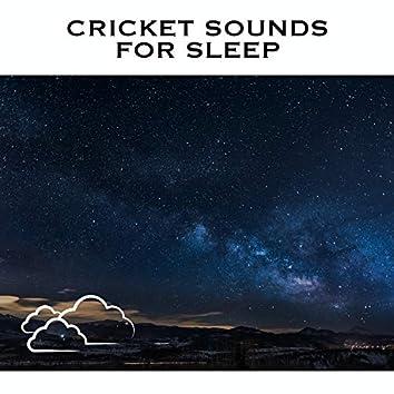 Cricket Sounds For Sleep