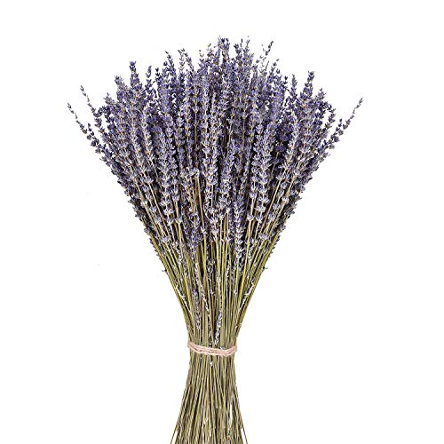 June Fox Dried Lavender Flowers 100% Natural Dried Lavender Bunches for Home Decoration, Home Fragrance, Handmade Soap Flower, 270-300 Stems