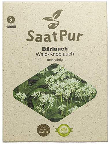 SaatPur Bärlauch Samen für ca. 50 Pflanzen