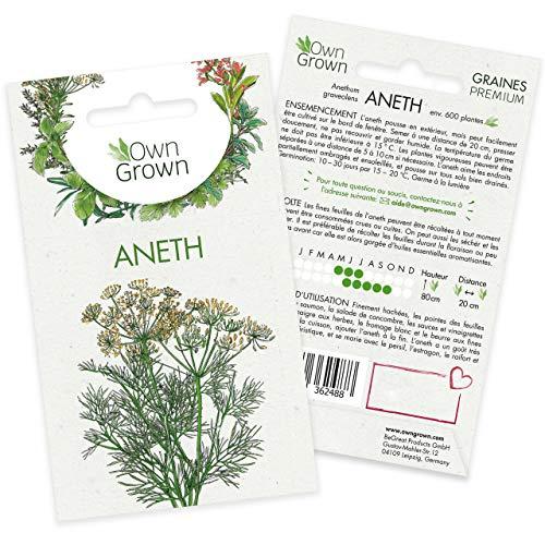 Graines d'aneth (Anethum graveolens), semences d'aneth cultivée OwnGrown, Semis pour environ 500 plantes