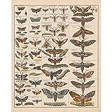 Meishe Art Poster Kunstdrucke Plakatdruck Moth Insekten