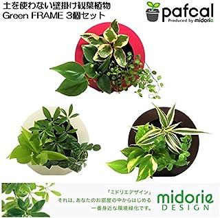 土を使わない壁掛け観葉植物 ミドリエGreenFRAME3個セット