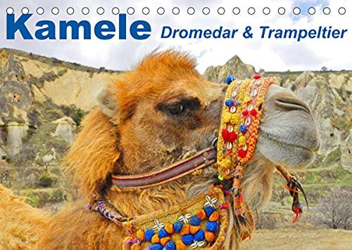 Kamele • Dromedar & Trampeltier (Tischkalender 2022 DIN A5 quer)