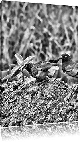 Vogels op een steenFoto Canvas | Maat: 120x80 cm | Wanddecoraties | Kunstdruk | Volledig gemonteerd
