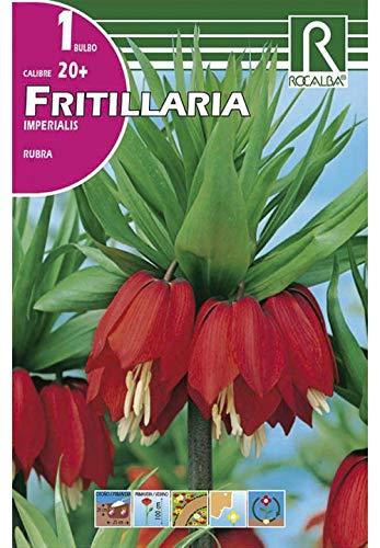 Bulbo de Fritillaria Imperialis Rubra (color rojo)