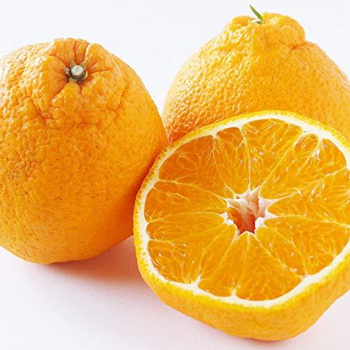 国華園 みかん 大特価 熊本産 ご家庭用 不知火オレンジ 5kg1箱