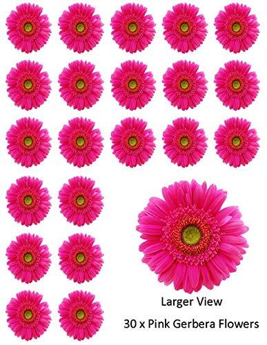 30 flores de gerbera rosa para cupcakes comestibles de papel de oblea para decoración de pasteles de cumpleaños