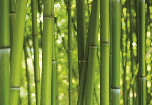1art1 Bambous Poster Papier Peint - Forêt De Bambou, 3 Parties (360 x 250 cm)
