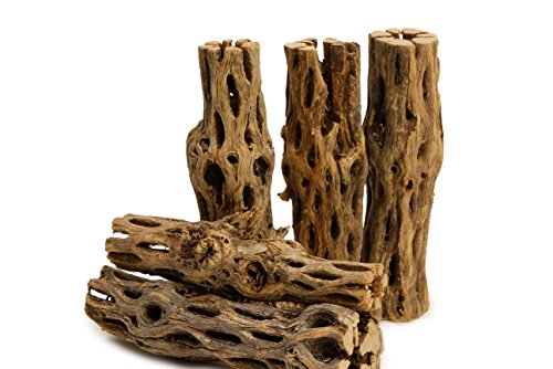 NApremium Natural Cholla Wood | 5 Pieces of 5-6' Long Natural Cholla Wood for Aquarium Decoration,...
