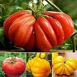 inkeme giardino - 100 mix di semi di pomodoro gigante organico, cuore di bue pomodoro di manzo pomodoro 1-2 libbre per pomodoro semi di frutta vegetale alto rendimento perenne hardy