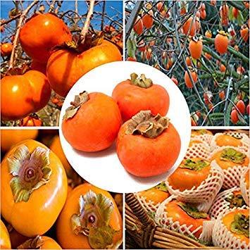 Germinación de Las Semillas: Egrow 30 PC/Semillas Paquete Placaminero Semilla Diospyros Kaki Fruta jardín de Bon