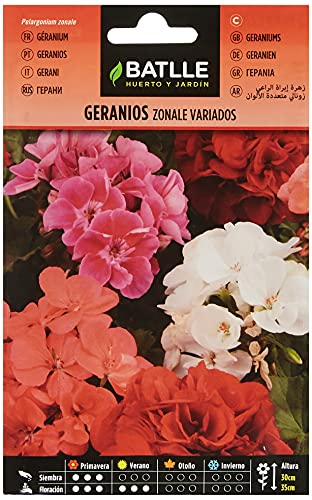 Semillas de Flores - Geranios Zonale variados - Batlle