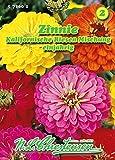 Zinnia elegans, Zinnie, Kalifornische Riesen, Mischung N.L.Chrestensen Samen