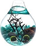 WayGlory Kit de mesa de moda para acuario, mini kit acuático, bola de musgo vivo, abanico de mar, gravas, concha de mar, roca volcán roja, decoración de escritorio decoración de interior (estilo C)