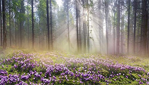 EdCott - 12 x 6,5ft mañana Nebligen bosque szenischen fondo vinilo sol rayos de luz van a través de la abundante madera lila flores campo de fondo naturaleza paisaje fiesta de cumpleaños Banner