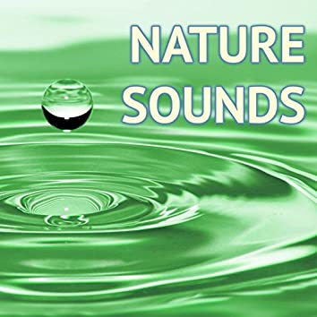 Nature Sounds - Powerful Relaxing Sound of Nature Music to Help Meditate & Sleep