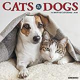 Cats & Dogs 2020 Wall Calendar